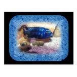 Tropical Fish Digital Watercolor Post Cards