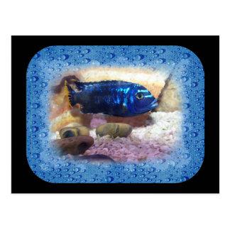 Tropical Fish Digital Watercolor Postcard