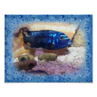 Tropical Fish Digital Watercolor Poster
