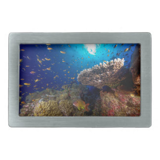 Tropical Fish Great Barrier Reef Coral Sea Gift Belt Buckle