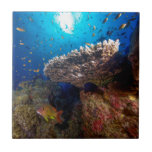 "Tropical Fish Great Barrier Reef Coral Sea Gift Ceramic Tile<br><div class=""desc"">Schools of abundant tropical fish and a beautiful plate coral with the sun blazing above on Australia&#39;s world heritage listed Great Barrier Reef in the Coral Sea.</div>"