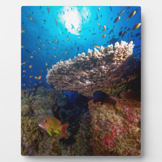 Tropical Fish Great Barrier Reef Coral Sea Gift Plaque