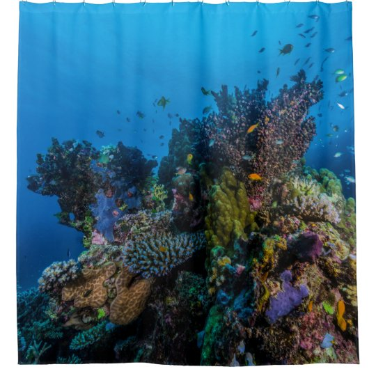 Curtains Ideas coral reef shower curtain : Tropical Fish Great Barrier Reef Coral Sea Gift Shower Curtain ...