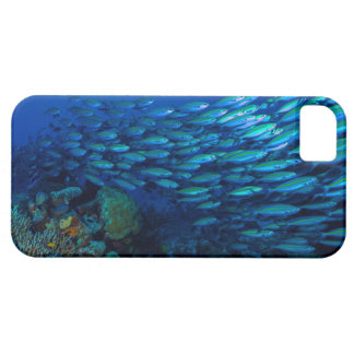 Tropical Fish Great Barrier Reef Coral Sea iPhone SE/5/5s Case