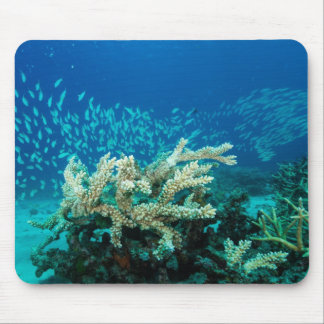 Tropical Fish Great Barrier Reef Coral Sea Mouse Pad