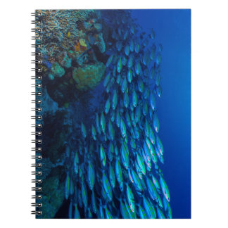 Tropical Fish Great Barrier Reef Coral Sea Notebook