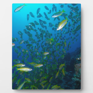 Tropical Fish Great Barrier Reef Coral Sea Plaque