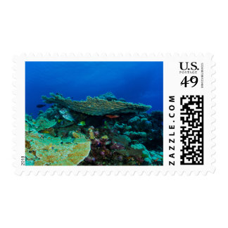 Tropical Fish Great Barrier Reef Coral Sea Postage