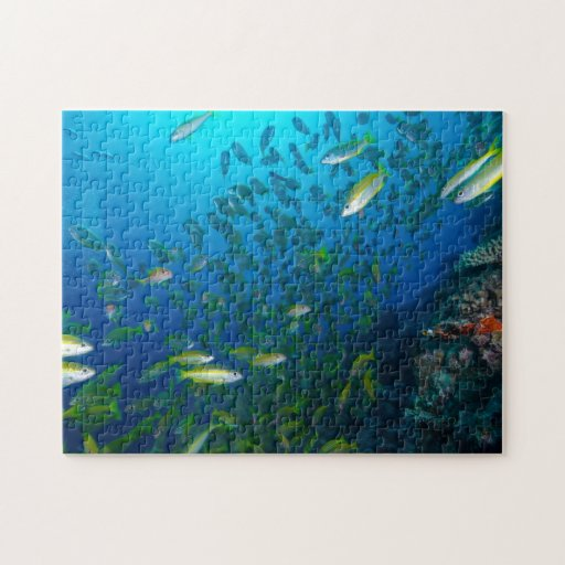 Tropical Fish Great Barrier Reef Coral Sea Puzzle