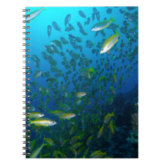 Tropical Fish Great Barrier Reef Coral Sea Spiral Notebook