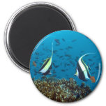 Tropical Fish Magnet 2 Inch Round Magnet