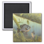 Tropical Fish Magnet 2 Inch Square Magnet