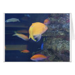 Tropical Fish Note Card