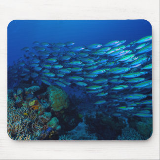 Tropical Fish of the Coral Sea Mousepad