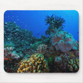 Tropical Fish of the Coral Sea Mouse Pad