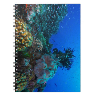 Tropical Fish of the Coral Sea Notebook