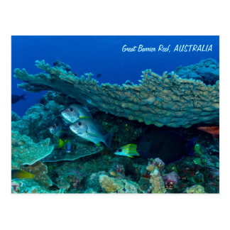 Tropical Fish of the Coral Sea Postcard