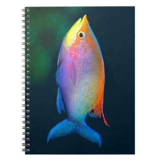 TROPICAL FISH PHOTO NOTEBOOK (80 Pages)