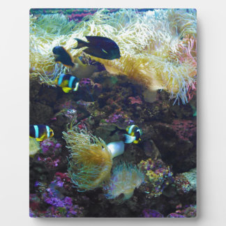 Tropical Fish Plaque