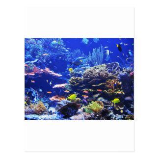 Tropical Fish Postcard