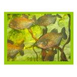 Tropical fish postcards