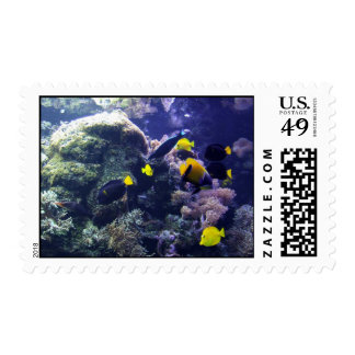 Tropical fish stamp