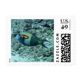 Tropical Fish Stamp