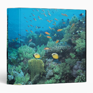 Tropical fish swimming over reef binder