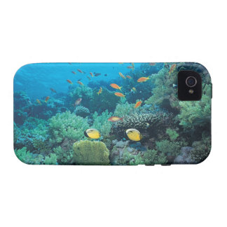 Tropical fish swimming over reef Case-Mate iPhone 4 cases