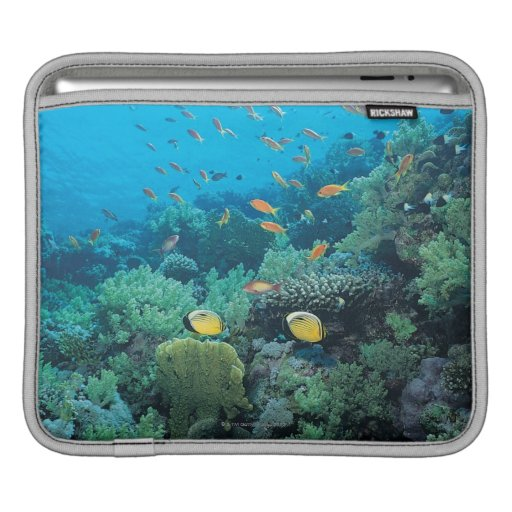 Tropical fish swimming over reef iPad sleeves