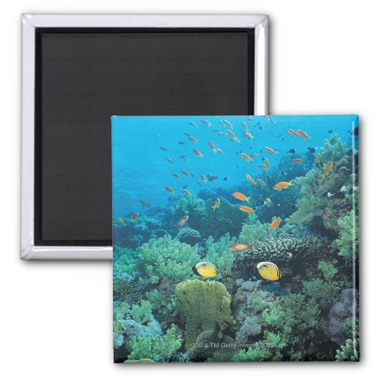 Tropical fish swimming over reef magnet