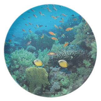 Tropical fish swimming over reef melamine plate