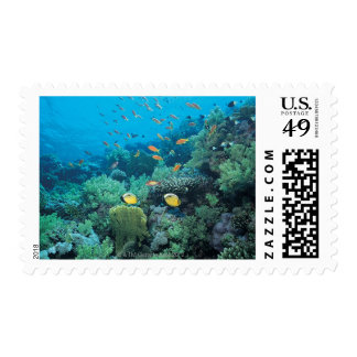 Tropical fish swimming over reef postage