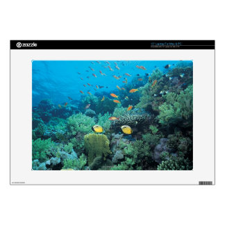 Tropical fish swimming over reef laptop decal