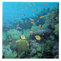 Tropical fish swimming over reef tile