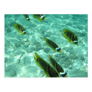 Tropical Fish Underwater Postcard