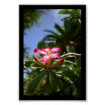 Tropical Flora Posters