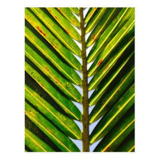 Tropical Florida Palm Postcard