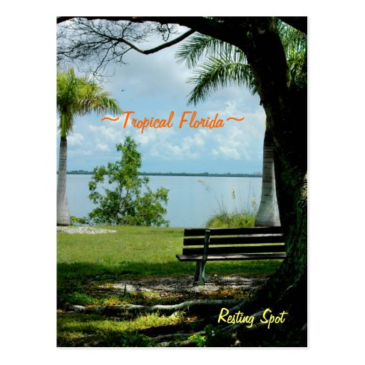 Tropical Florida Resting Spot Postcard