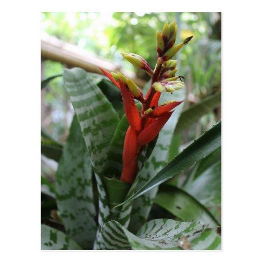 Tropical Flower # 1 Postcards