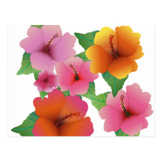 Tropical flower exotic hibiscus postcard