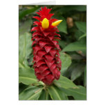 Tropical Flower Note Cards | Shampoo Ginger