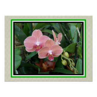 Tropical Flower Pink Orchid - Poster