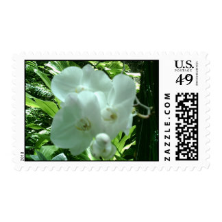Tropical Flower Postage Stamp