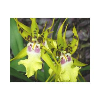 Tropical Flowers Near Hilo Hawaii Canvas Print