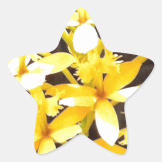 Tropical Flowers Star Sticker