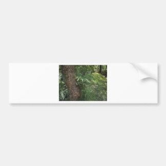 Tropical Forest Bumper Sticker