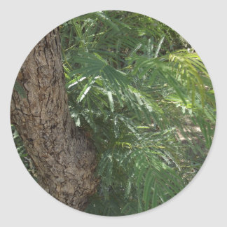 Tropical Forest Classic Round Sticker
