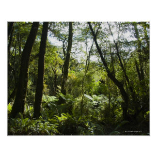 Tropical forest with moss-covered trees and tree poster