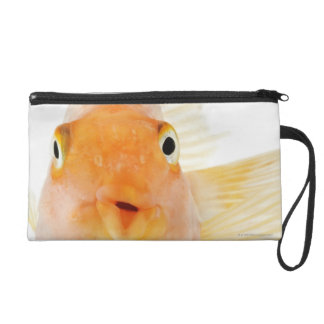 Tropical freshwater fish wristlets